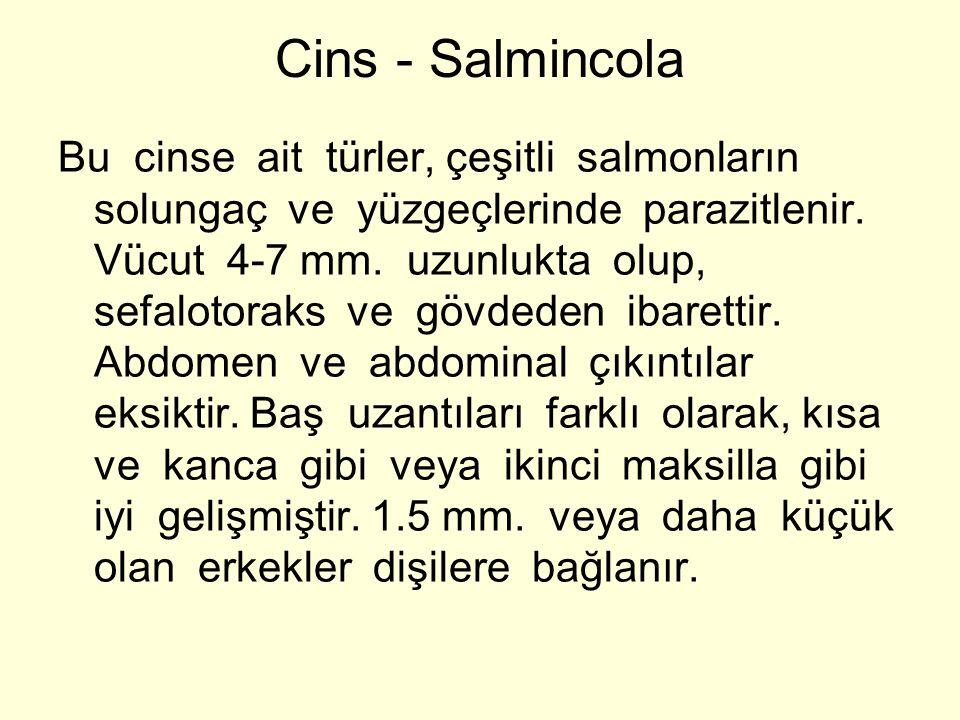 Cins - Salmincola Bu cinse ait türler, çeşitli salmonların solungaç ve yüzgeçlerinde parazitlenir. Vücut 4-7 mm. uzunlukta olup, sefalotoraks ve gövde