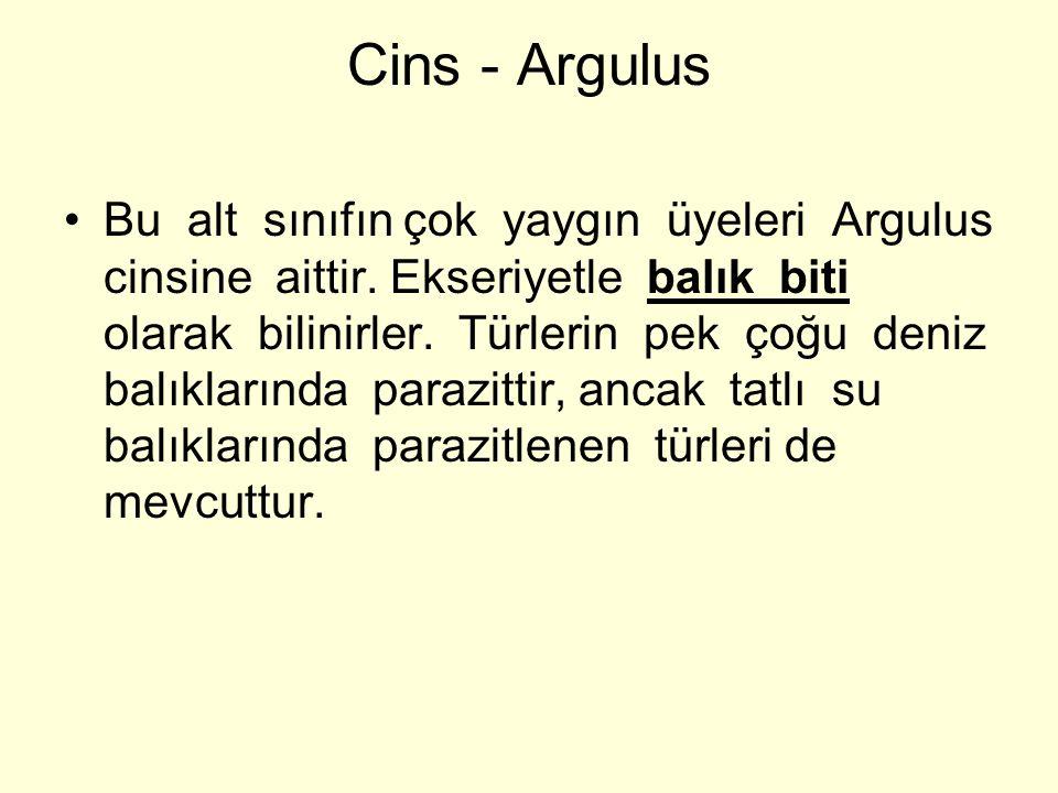 Cins - Argulus Bu alt sınıfın çok yaygın üyeleri Argulus cinsine aittir. Ekseriyetle balık biti olarak bilinirler. Türlerin pek çoğu deniz balıklarınd