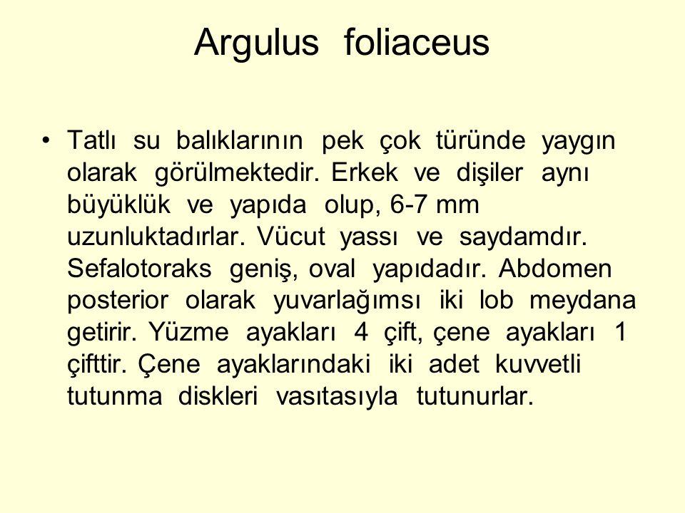 Argulus foliaceus Tatlı su balıklarının pek çok türünde yaygın olarak görülmektedir.