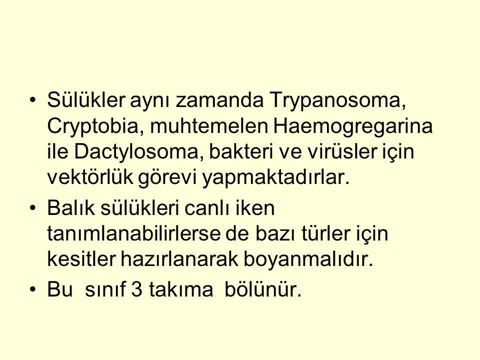 Sülükler aynı zamanda Trypanosoma, Cryptobia, muhtemelen Haemogregarina ile Dactylosoma, bakteri ve virüsler için vektörlük görevi yapmaktadırlar.