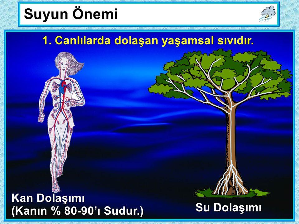 Suyun Önemi Kan Dolaşımı (Kanın % 80-90'ı Sudur.) Su Dolaşımı 1.