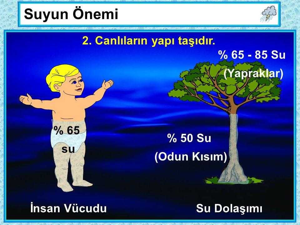 Suyun Önemi 2. Canlıların yapı taşıdır.