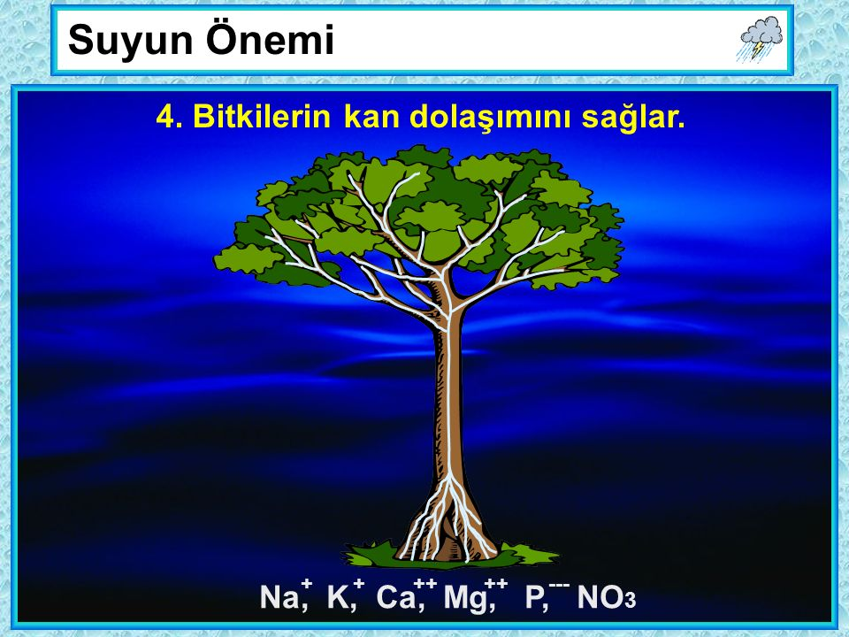 Suyun Önemi 4. Bitkilerin kan dolaşımını sağlar. Na, K, Ca, Mg, P, NO 3 ++++ ---