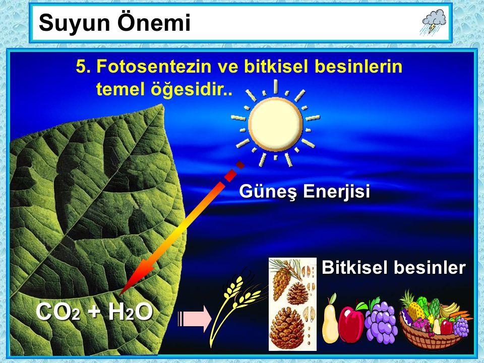 Suyun Önemi 5. Fotosentezin ve bitkisel besinlerin temel öğesidir..
