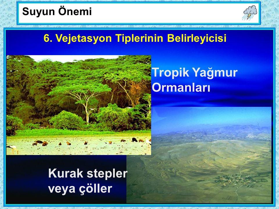 Tropik Yağmur Ormanları Kurak stepler veya çöller Suyun Önemi 6.