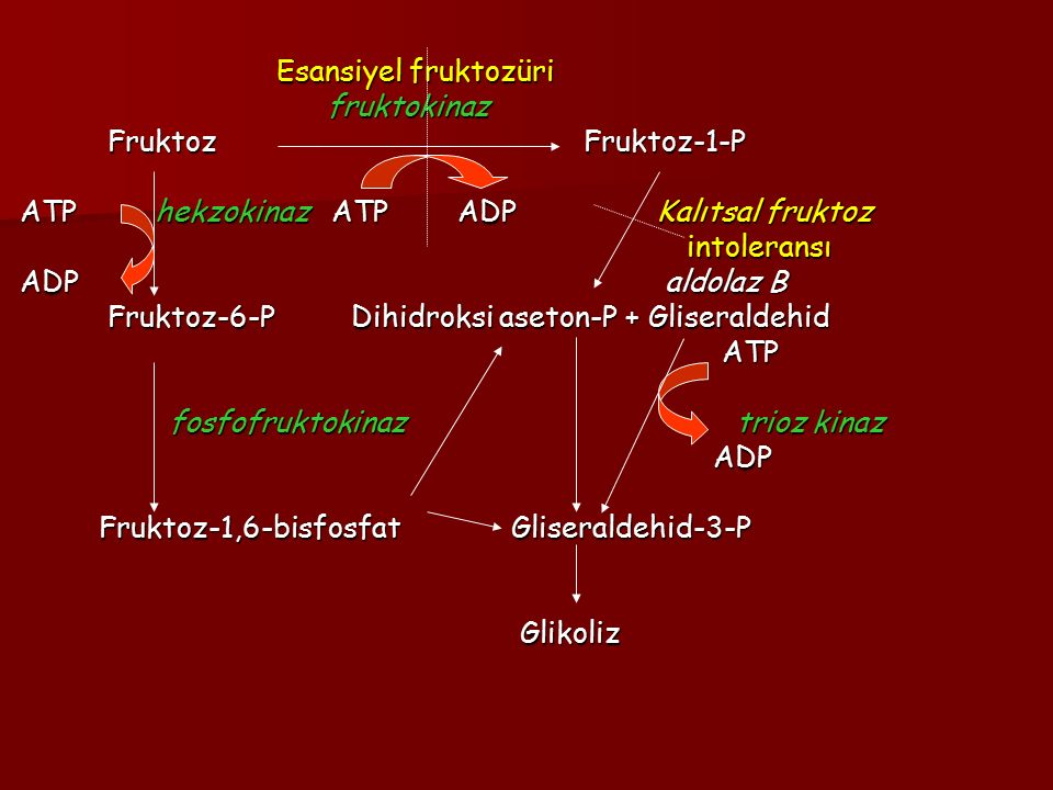 Esansiyel fruktozüri Esansiyel fruktozüri fruktokinaz fruktokinaz Fruktoz Fruktoz-1-P Fruktoz Fruktoz-1-P ATP hekzokinaz ATP ADP Kalıtsal fruktoz ATP