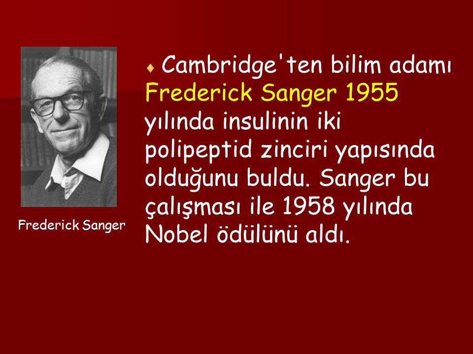  Cambridge ten bilim adamı Frederick Sanger 1955 yılında insulinin iki polipeptid zinciri yapısında olduğunu buldu.