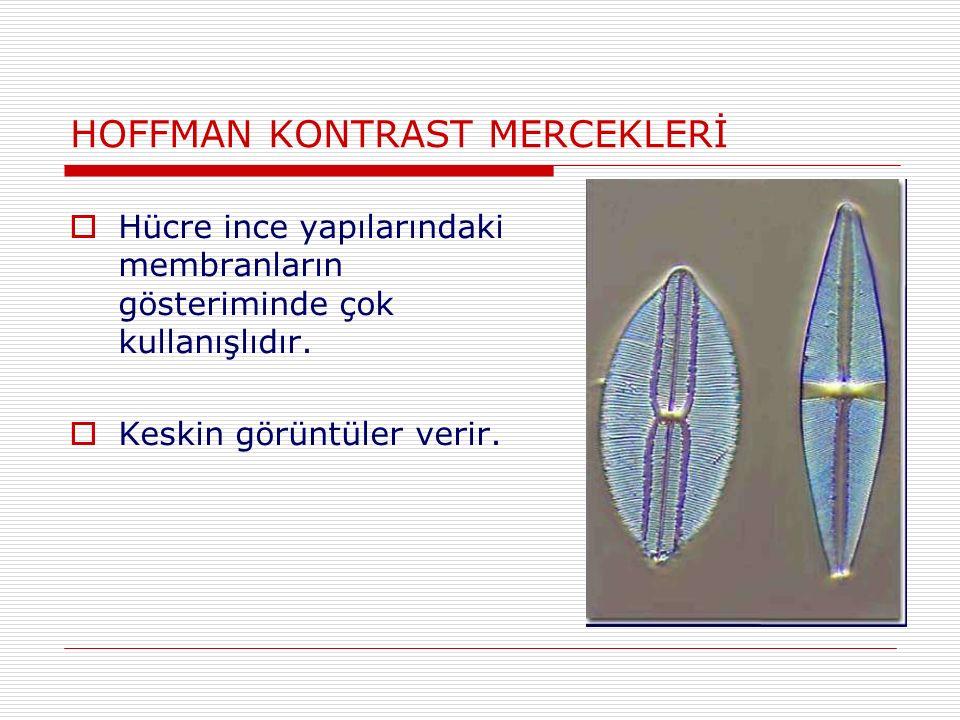 HOFFMAN KONTRAST MERCEKLERİ  Hücre ince yapılarındaki membranların gösteriminde çok kullanışlıdır.