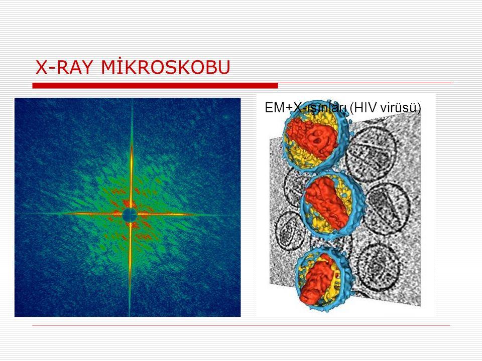 X-RAY MİKROSKOBU EM+X-ışınları (HIV virüsü)