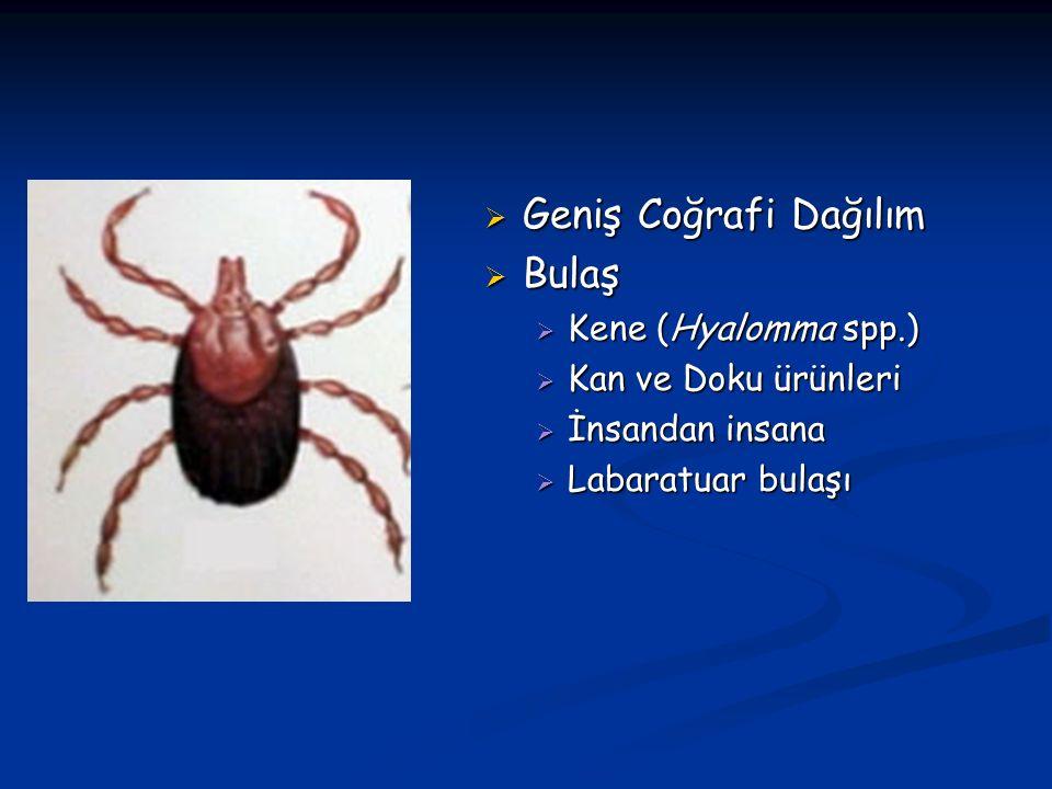 KKKA ETKENİ  Kırım Kongo kanamalı ateşi etkeni Bunyaviridae ailesinin beş genusundan birini oluşturan Nairovirüs genusu içerisindedir(Orthobunyavirus, Hantavirus, Phlebovirus, Nairovirus, ve Tospovirus)  Bunyavirüs ailesinin üyeleri üç parçalı negatif polariteli, 100 nm (nanometre) büyüklüğünde, heliksel kapsidli ve zarflı RNA virüsleridir.