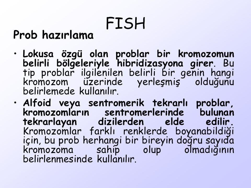 FISH Prob hazırlama Lokusa özgü olan problar bir kromozomun belirli bölgeleriyle hibridizasyona girer. Bu tip problar ilgilenilen belirli bir genin ha