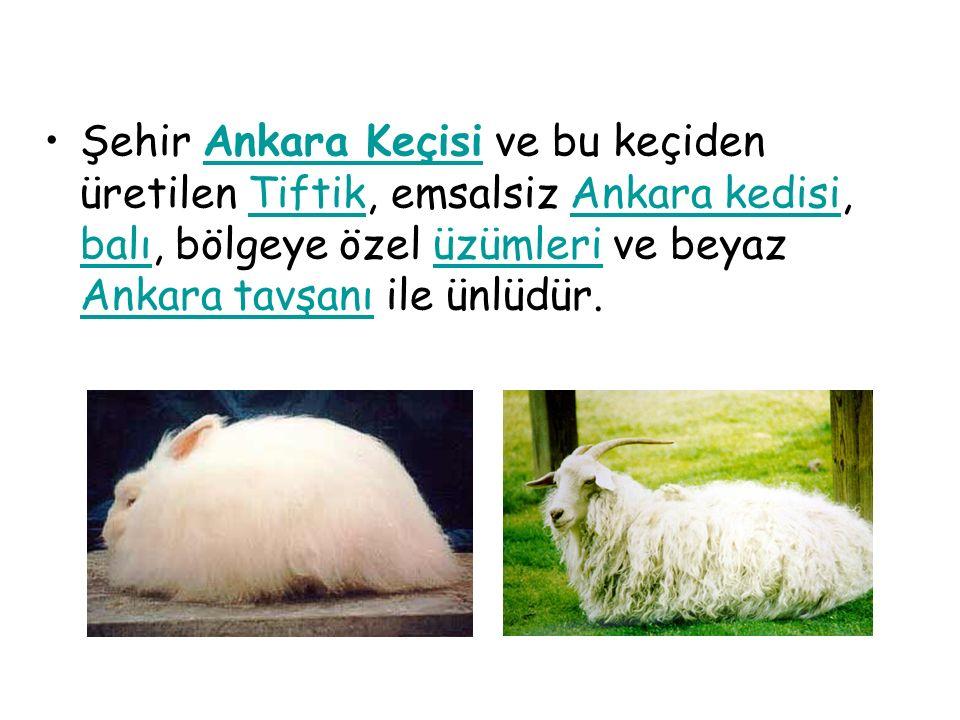 Şehir Ankara Keçisi ve bu keçiden üretilen Tiftik, emsalsiz Ankara kedisi, balı, bölgeye özel üzümleri ve beyaz Ankara tavşanı ile ünlüdür.Ankara KeçisiTiftikAnkara kedisi balıüzümleri Ankara tavşanı