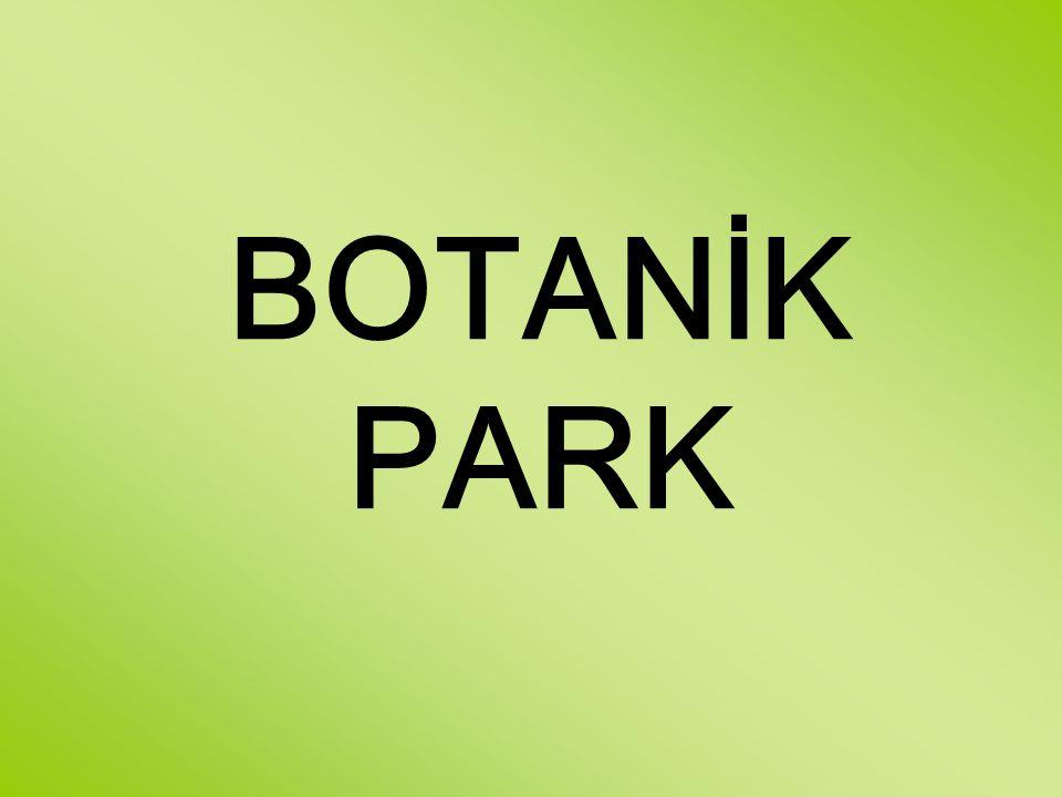 BOTANİK PARK