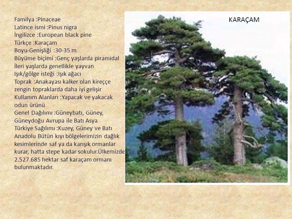 Familya :Pinaceae Latince ismi :Pinus nigra İngilizce :European black pine Türkçe :Karaçam Boyu-Genişliği :30-35 m Büyüme biçimi :Genç yaşlarda piramidal İleri yaşlarda genellikle yayvan Işık/gölge isteği :Işık ağacı Toprak :Anakayası kalker olan kireççe zengin topraklarda daha iyi gelişir Kullanım Alanları :Yapacak ve yakacak odun ürünü Genel Dağılımı :Güneybatı, Güney, Güneydoğu Avrupa ile Batı Asya Türkiye Sağılımı :Kuzey, Güney ve Batı Anadolu Bütün kıyı bölgelerimizin dağlık kesimlerinde saf ya da karışık ormanlar kurar, hatta stepe kadar sokulur.Ülkemizde 2.527.685 hektar saf karaçam ormanı bulunmaktadır.