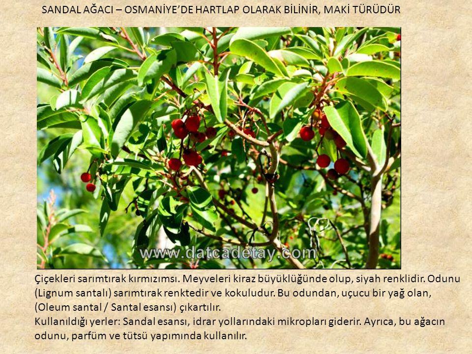 Çiçekleri sarımtırak kırmızımsı.Meyveleri kiraz büyüklüğünde olup, siyah renklidir.