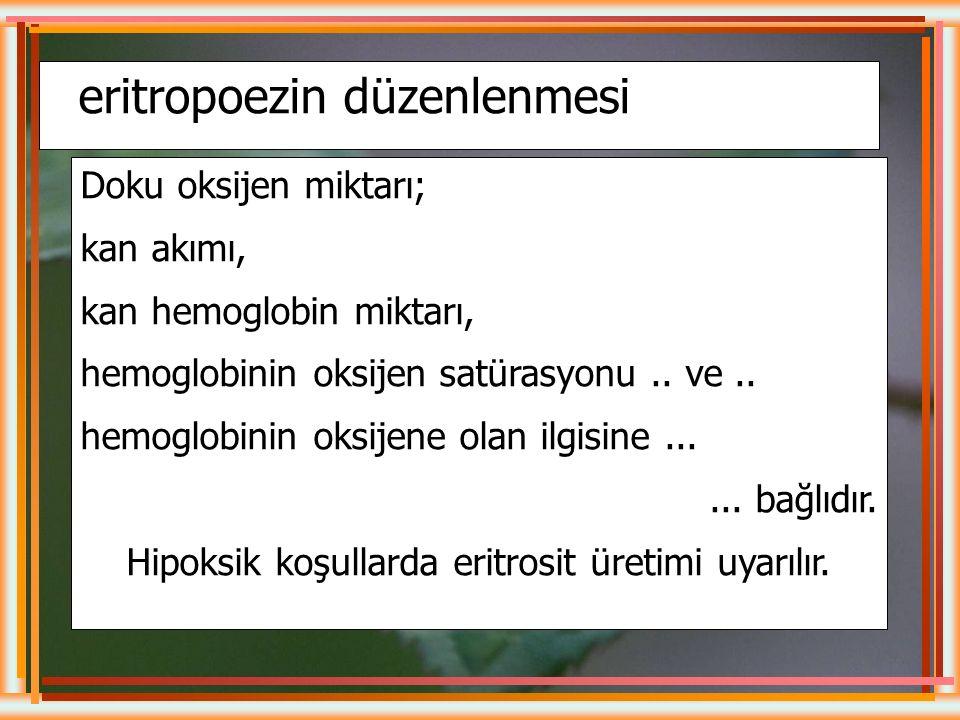 Hemoliz : Eritrosit zarının yırtılarak hemoglobinin hücre dışına çıkması anlamına gelir. Hb'nin metabolize olması sonucu sarı renkte biluribin açığa ç