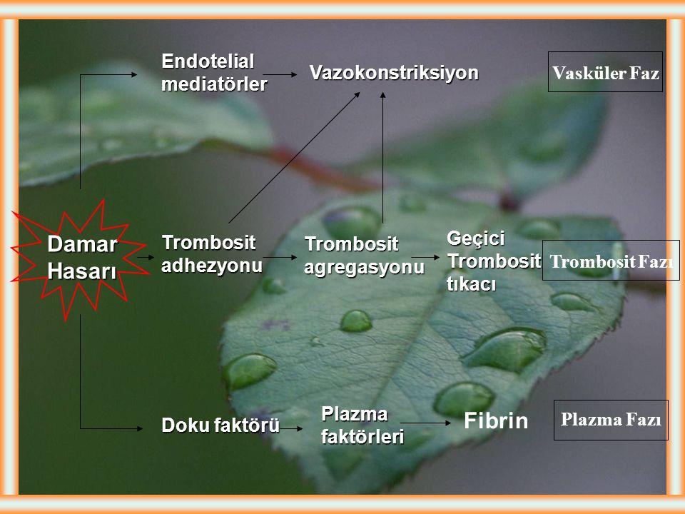 Doku Faktörü Hasarlanan endotel hücreler ve monositlerden üretilir ve salınır. Hasarlı hücre trombin oluşumunda artma Doku Faktörü (TF) tetikleyici ro