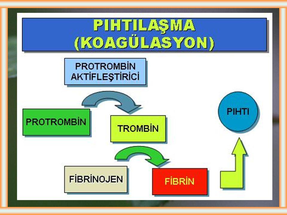 TROMBOSİTLER Pıhtılaşma faktörlerinden FI, FII, FIII, FIV, FV, FVII, FIX ve FX karaciğerde sentezlenir. FI ve FV dışındakilerin sentezi için K vitamin