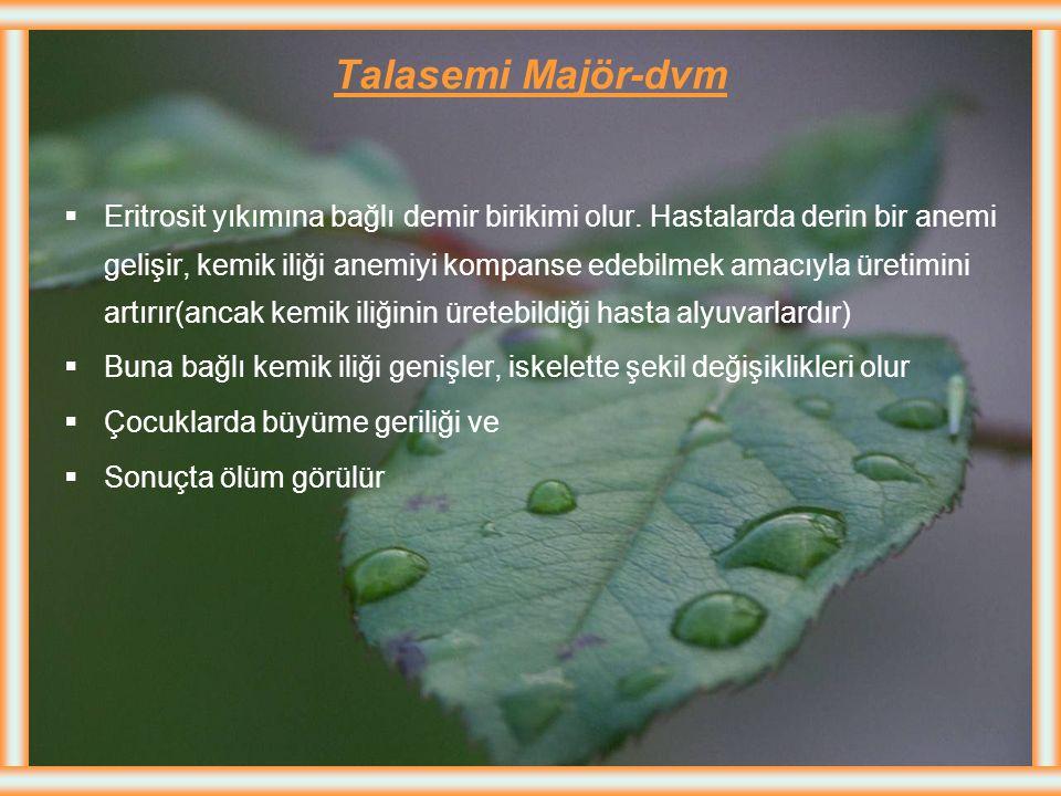 Talasemi Majör  Akdeniz anemisi olarak ta bilinen, erken çocuklukta başlayan, çok ciddi bir kan hastalığıdır  Talasemi majörde beta zincir yapımı yo