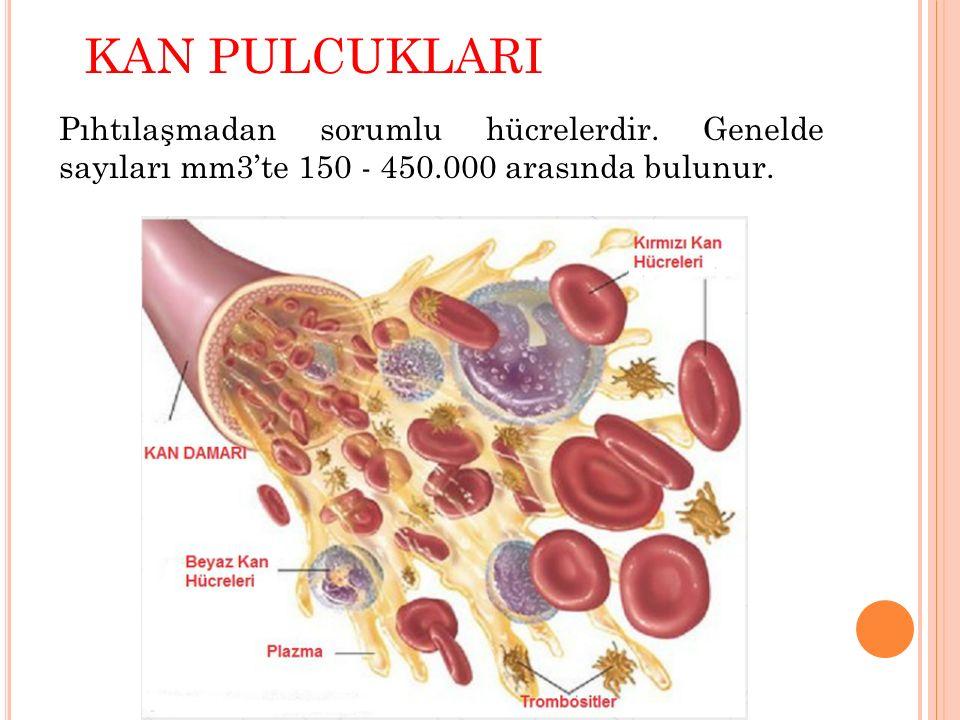 KAN PULCUKLARI Pıhtılaşmadan sorumlu hücrelerdir. Genelde sayıları mm3'te 150 - 450.000 arasında bulunur.