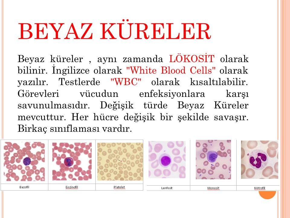 KAYNAKÇA  Sümer Z, Sümer H, Bakıcı MZ, Koç S.