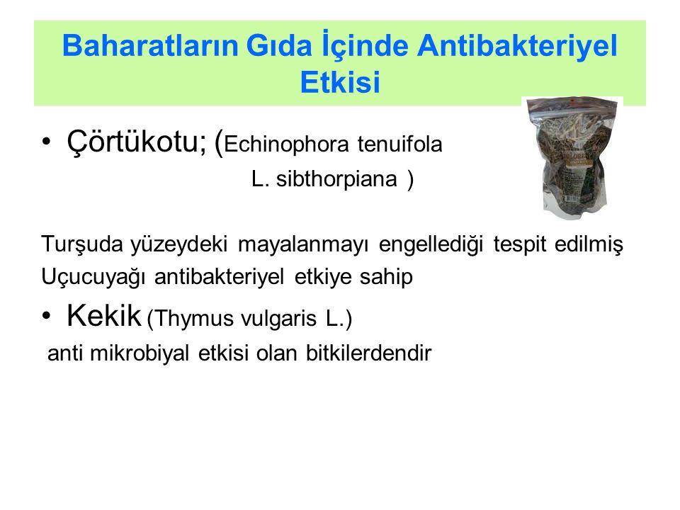 Baharatların Gıda İçinde Antibakteriyel Etkisi Çörtükotu; ( Echinophora tenuifola L. sibthorpiana ) Turşuda yüzeydeki mayalanmayı engellediği tespit e