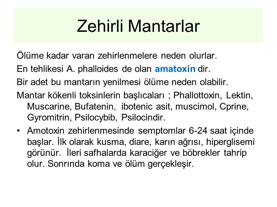 Zehirli Mantarlar Ölüme kadar varan zehirlenmelere neden olurlar. En tehlikesi A. phalloides de olan amatoxin dir. Bir adet bu mantarın yenilmesi ölüm