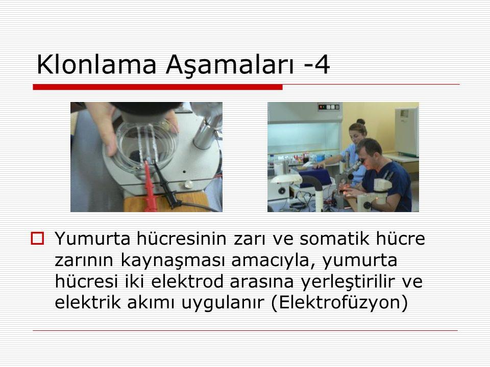 Klonlama Aşamaları -4  Yumurta hücresinin zarı ve somatik hücre zarının kaynaşması amacıyla, yumurta hücresi iki elektrod arasına yerleştirilir ve el