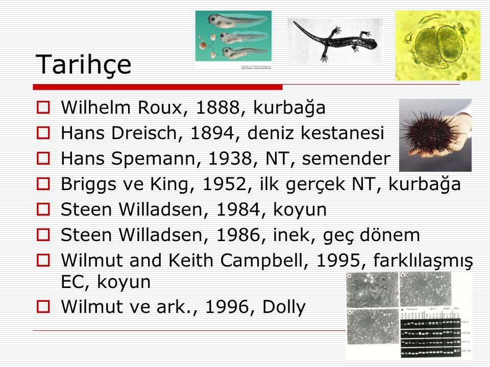 Tarihçe  Wilhelm Roux, 1888, kurbağa  Hans Dreisch, 1894, deniz kestanesi  Hans Spemann, 1938, NT, semender  Briggs ve King, 1952, ilk gerçek NT,