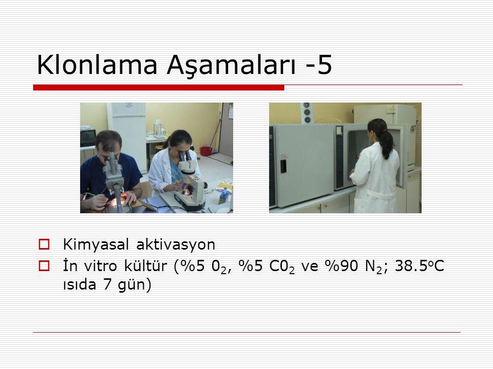 Klonlama Aşamaları -5  Kimyasal aktivasyon  İn vitro kültür (%5 0 2, %5 C0 2 ve %90 N 2 ; 38.5 o C ısıda 7 gün)