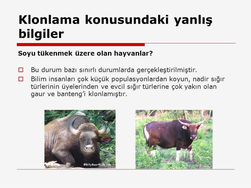 Klonlama konusundaki yanlış bilgiler Soyu tükenmek üzere olan hayvanlar?  Bu durum bazı sınırlı durumlarda gerçekleştirilmiştir.  Bilim insanları ço