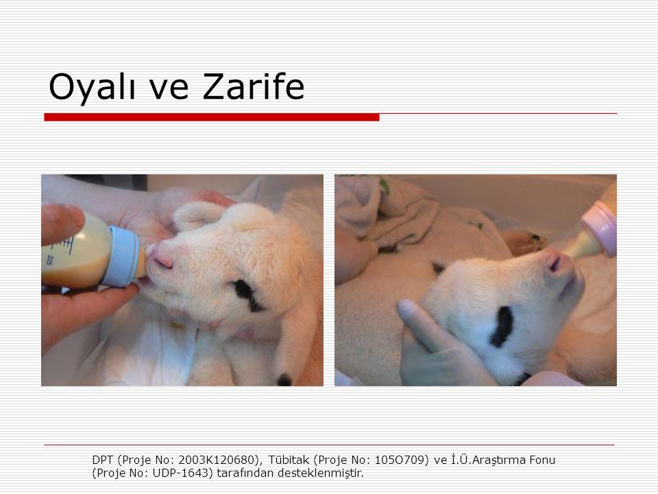 Oyalı ve Zarife DPT (Proje No: 2003K120680), Tübitak (Proje No: 105O709) ve İ.Ü.Araştırma Fonu (Proje No: UDP-1643) tarafından desteklenmiştir.