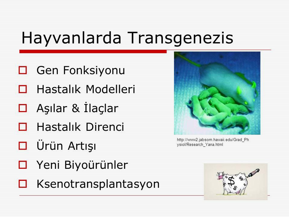 Hayvanlarda Transgenezis  Gen Fonksiyonu  Hastalık Modelleri  Aşılar & İlaçlar  Hastalık Direnci  Ürün Artışı  Yeni Biyoürünler  Ksenotransplan