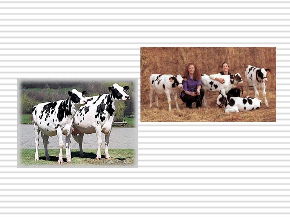 Klonlama konusundaki yanlış bilgiler Yanlış bilgi: Klonlama çiftlik hayvanlarındaki hastalıkları tedavi edecektir.