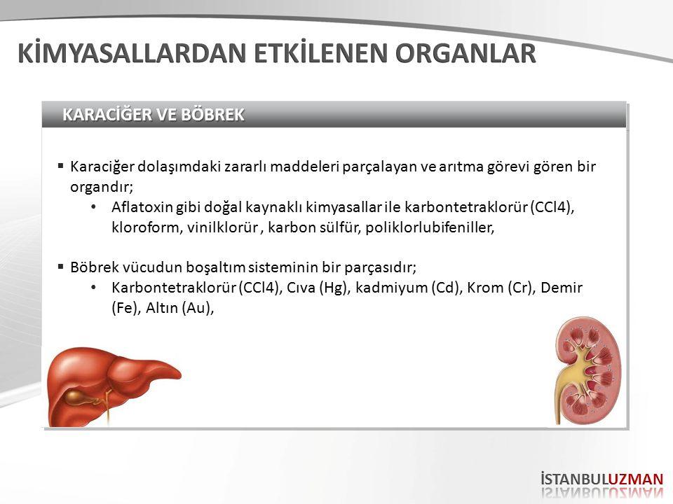 KARACİĞER VE BÖBREK  Karaciğer dolaşımdaki zararlı maddeleri parçalayan ve arıtma görevi gören bir organdır; Aflatoxin gibi doğal kaynaklı kimyasalla