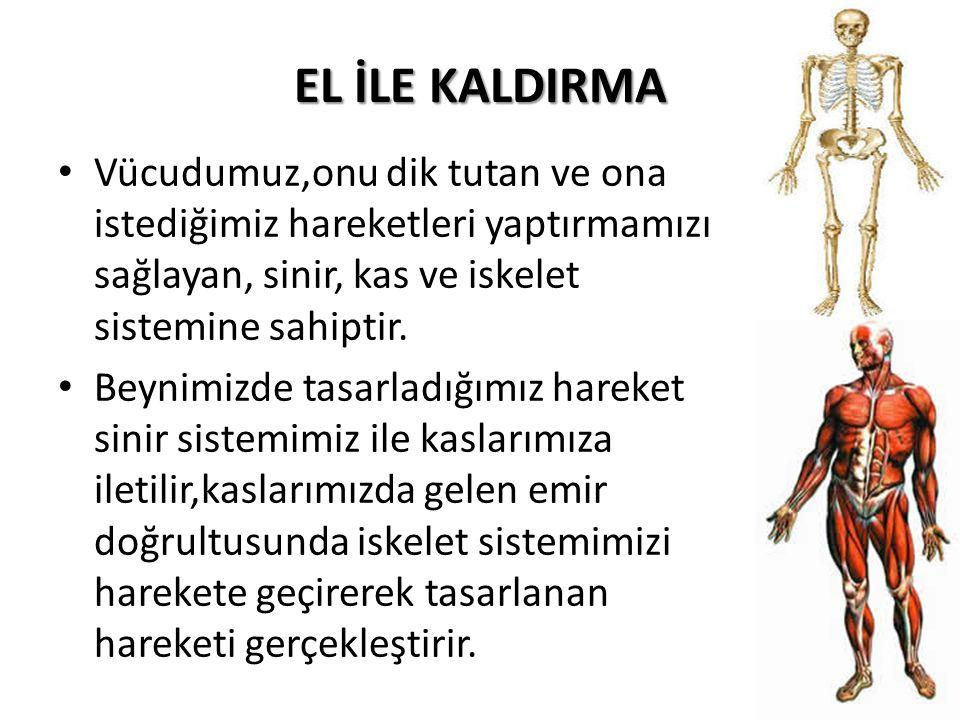 EL İLE KALDIRMA Vücudumuz,onu dik tutan ve ona istediğimiz hareketleri yaptırmamızı sağlayan, sinir, kas ve iskelet sistemine sahiptir.