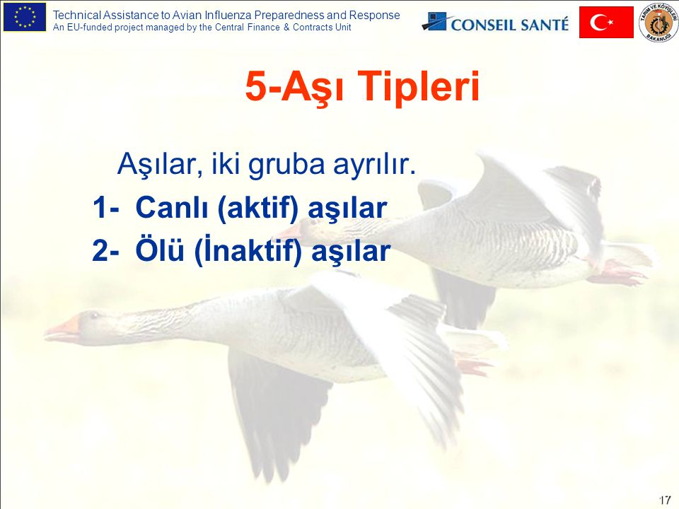 Technical Assistance to Avian Influenza Preparedness and Response An EU-funded project managed by the Central Finance & Contracts Unit 17 5-Aşı Tipler