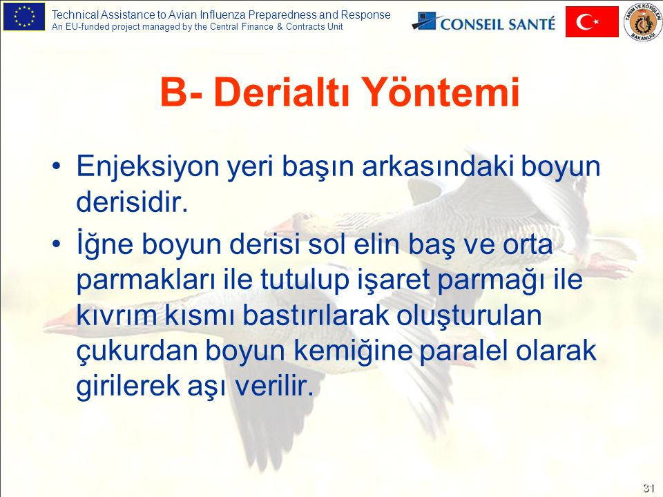 Technical Assistance to Avian Influenza Preparedness and Response An EU-funded project managed by the Central Finance & Contracts Unit 31 B- Derialtı