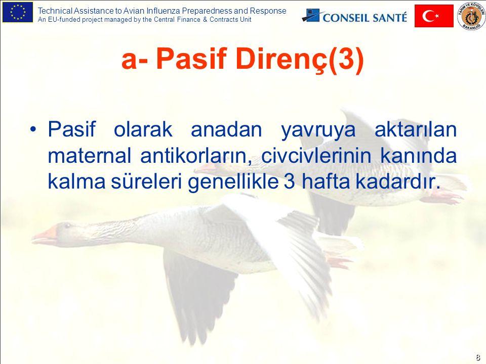 Technical Assistance to Avian Influenza Preparedness and Response An EU-funded project managed by the Central Finance & Contracts Unit 8 Pasif olarak anadan yavruya aktarılan maternal antikorların, civcivlerinin kanında kalma süreleri genellikle 3 hafta kadardır.