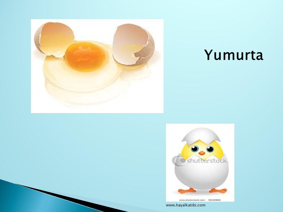 Yumurta www.hayalkatibi.com