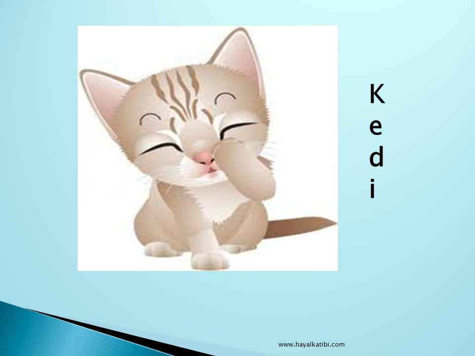 KediKedi