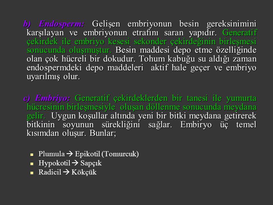 b) Endosperm: Gelişen embriyonun besin gereksinimini karşılayan ve embriyonun etrafını saran yapıdır.