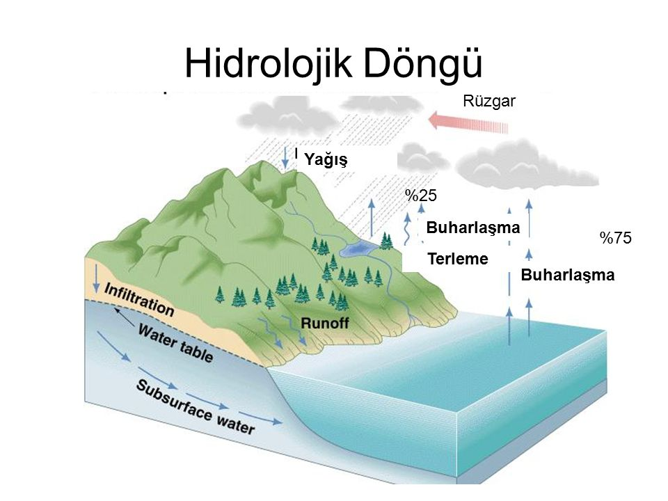 Hidrolojik Döngü Yağış Terleme Buharlaşma Rüzgar %75 %25 Buharlaşma