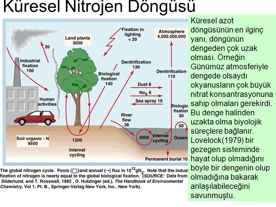 Küresel Nitrojen Döngüsü Küresel azot döngüsünün en ilginç yanı, döngünün dengeden çok uzak olması.