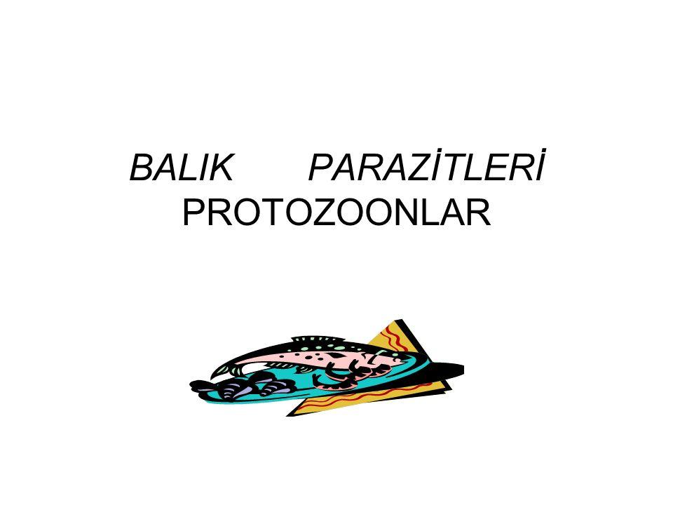 BALIK PARAZİTLERİ PROTOZOONLAR