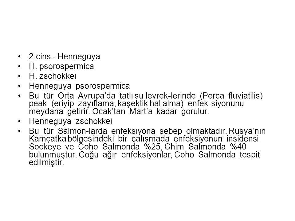 2.cins - Henneguya H. psorospermica H.