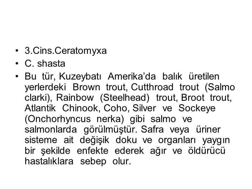 3.Cins.Ceratomyxa C.