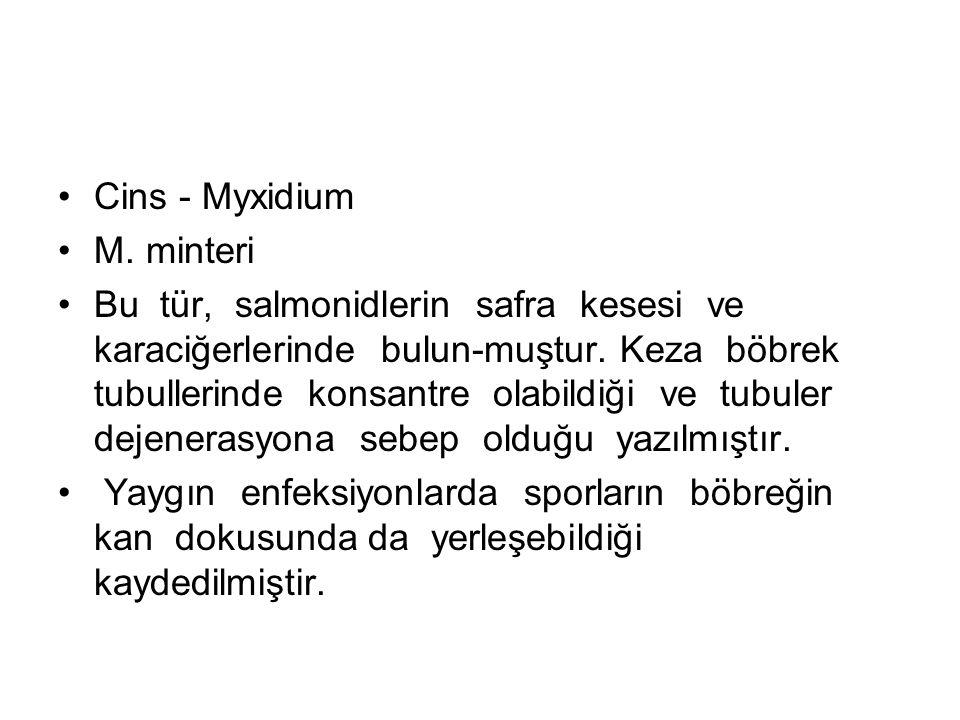 Cins - Myxidium M. minteri Bu tür, salmonidlerin safra kesesi ve karaciğerlerinde bulun-muştur.