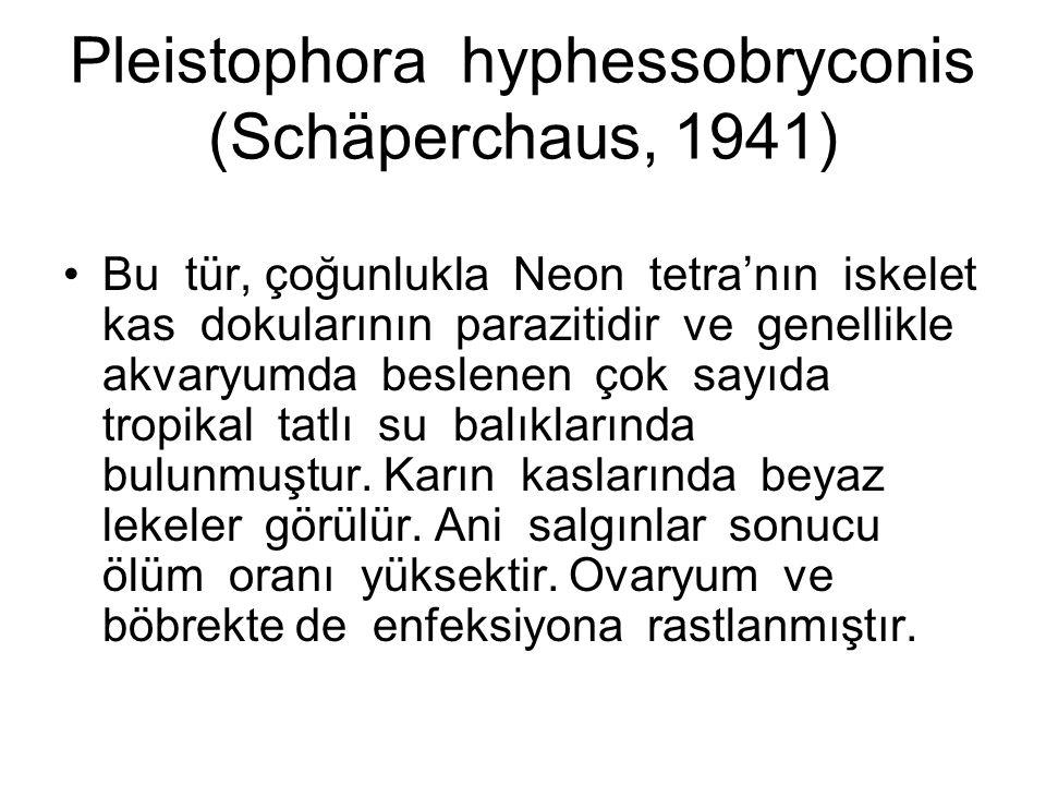 Pleistophora hyphessobryconis (Schäperchaus, 1941) Bu tür, çoğunlukla Neon tetra'nın iskelet kas dokularının parazitidir ve genellikle akvaryumda beslenen çok sayıda tropikal tatlı su balıklarında bulunmuştur.