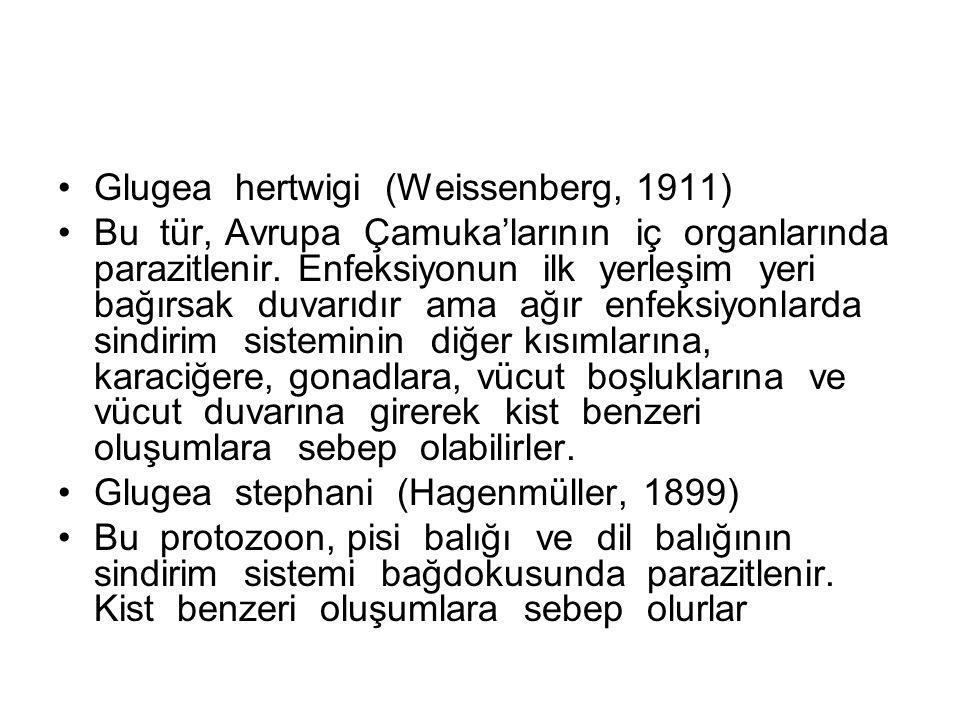 Glugea hertwigi (Weissenberg, 1911) Bu tür, Avrupa Çamuka'larının iç organlarında parazitlenir.